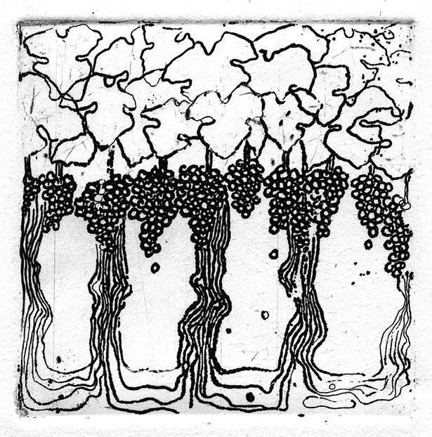 vignes-gravure